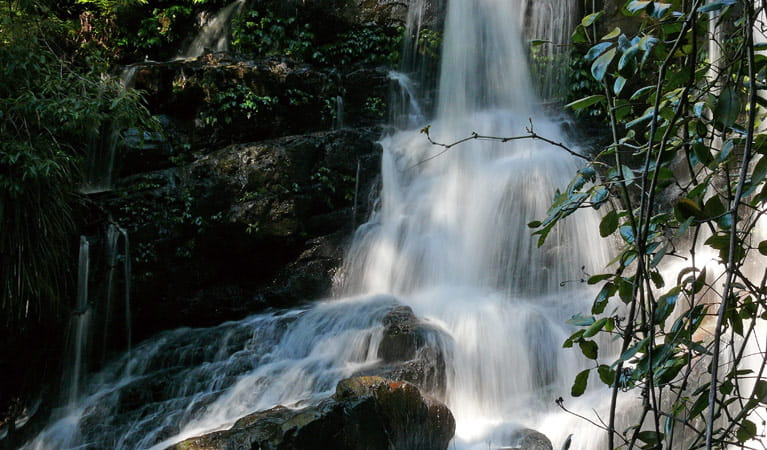 Bangalore Falls, Bindarri National Park. Photo: Helen Clark/NSW Government