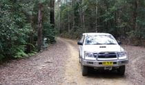 Pine Road, Bindarri National Park. Photo: Barbara Webster/NSW Government