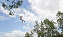Man riding the flying fox at TreeTops Newcastle. Photo: Michelle Baker