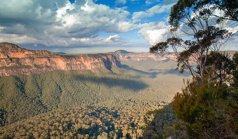 Perrys Lookdown campground, Blue Mountains National Park. Photo: Nick Cubbin/OEH
