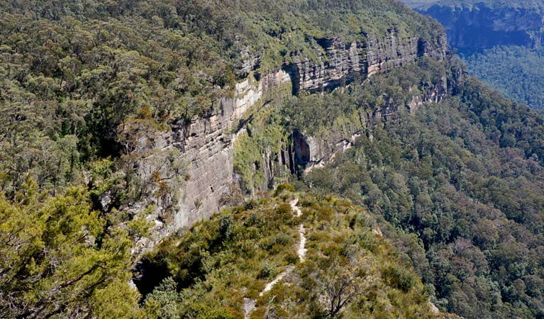 Aerial view of Cliff Top walking track, Blue Mountains National Park. Photo: Steve Alton/OEH