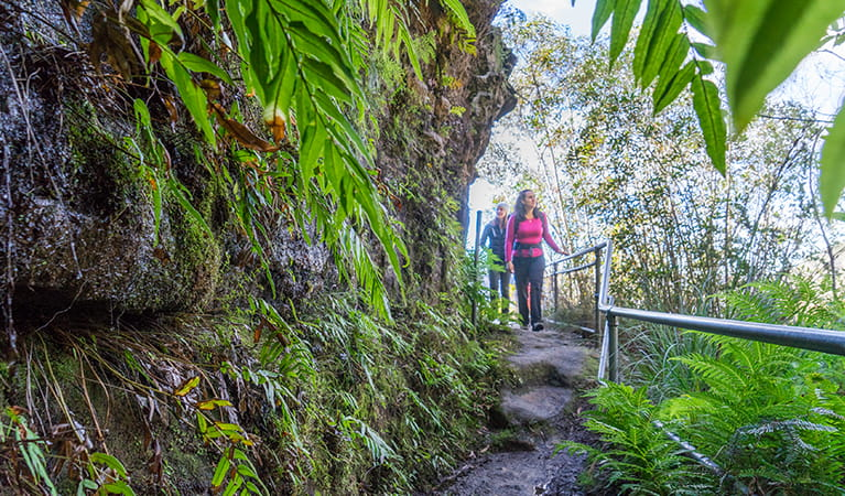 Walkers passing by lush ferns and hanging swamps on Govetts Leap descent walk. Photo: OEH/Simone Cottrell