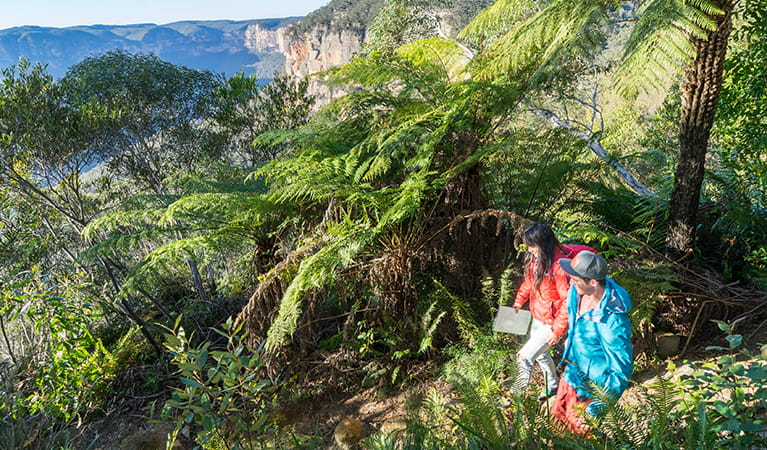 Walkers passing king ferns and views of the Grose Valley on Govetts Leap descent. Photo: OEH/Simone Cottrell