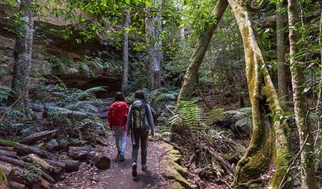 Two hikers walk through rainforest along Grand Canyon track, Blue Mountains National Park. Photo: Simone Cottrell/OEH.