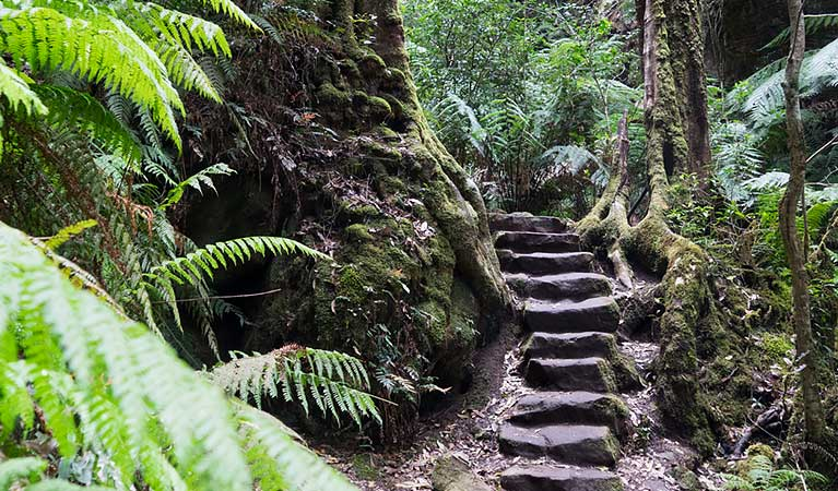 Rock-carved steps beside a tree on Grand Canyon track, Blue Mountains National Park. Photo: Simone Cottrell/OEH.