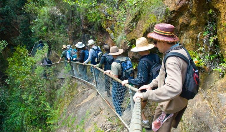 A tour group descends Grand Canyon track, Blue Mountains National Park. Photo: Steve Alton/NSW Government