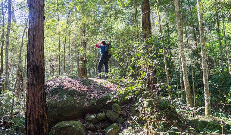 A hiker stands on a rock along Rodriguez Pass walking track, Blue Mountains National Park. Photo: Simone Cottrell/OEH.