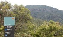 Sign at the start of Mount Hay summit walking track, north Leura, Blue Mountains National Park. Photo: Arthur Henry/OEH.