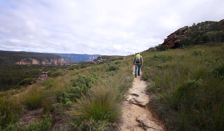 A man walks along rocky Mount Hay summit walking track, Blue Mountains National Park. Photo: Elinor Sheargold/OEH.