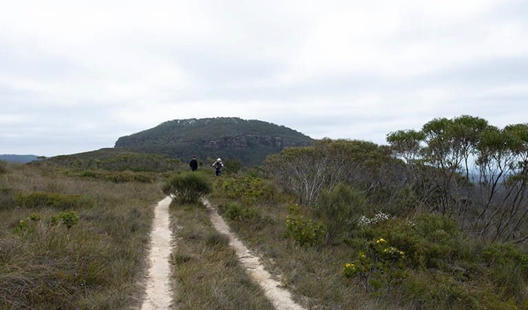 Two men walk towards Mount Hay summit, Blue Mountains National Park. Photo: Elinor Sheargold/OEH.