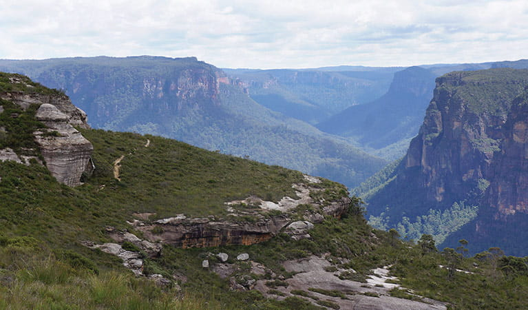 Views of sandstone cliffs and Grose Valley gorge, Mount Hay summit walk, Blue Mountains National Park. Photo: Stephen Alton/OEH.
