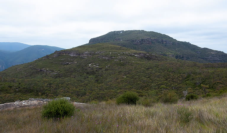 View towards Mount Hay summit from heathland, Blue Mountains National Park. Photo: Elinor Sheargold/OEH.