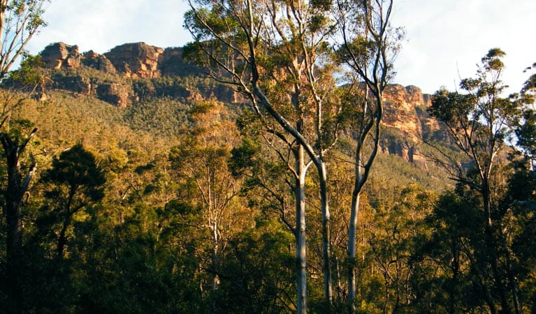 Perrys Lookdown to Blue Gum Forest, Blue Mountains National Park. Photo: Craig Marshall