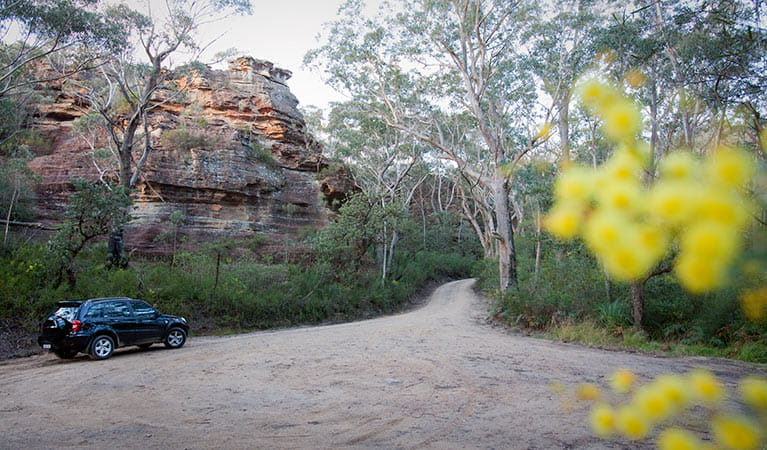 Pierces Pass to Blue Gum Forest walking track, Blue Mountains National Park. Photo: Nick Cubbin