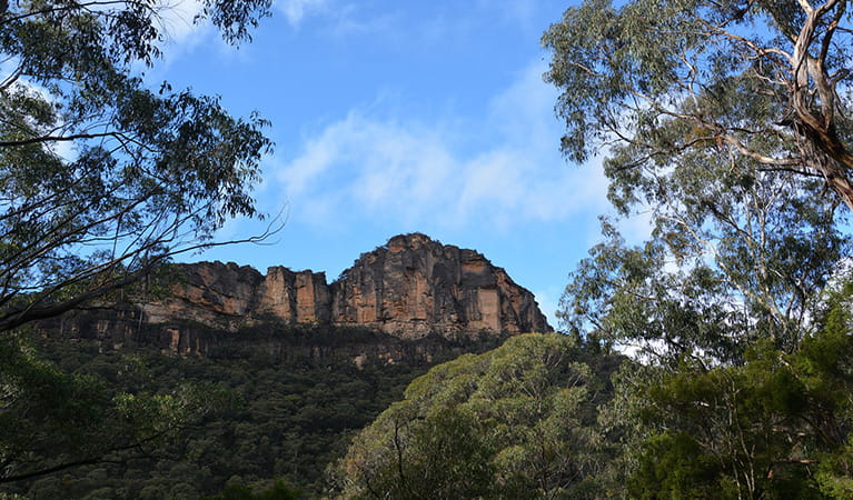 Cliff face to the east of Victoria Falls, in Blue Mountains National Park. Photo: Grant Purcell © DPIE