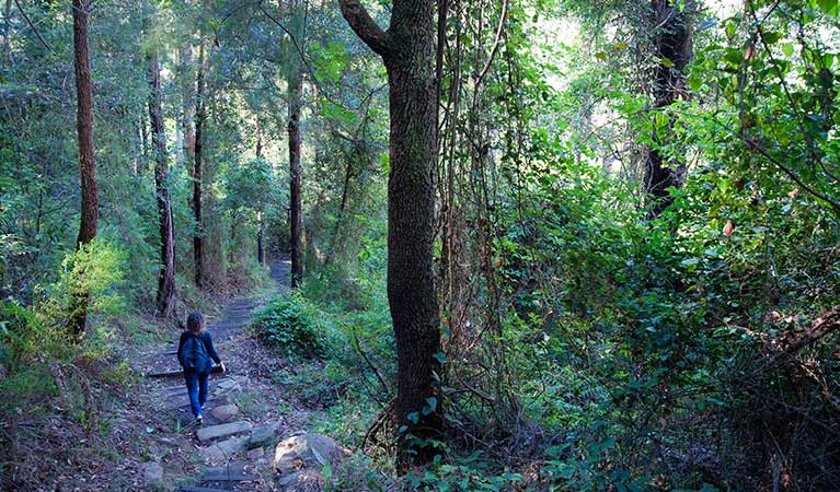 A woman walks along Nepean River walking track in Blue Mountains National Park. Photo: Nick Cubbin/OEH