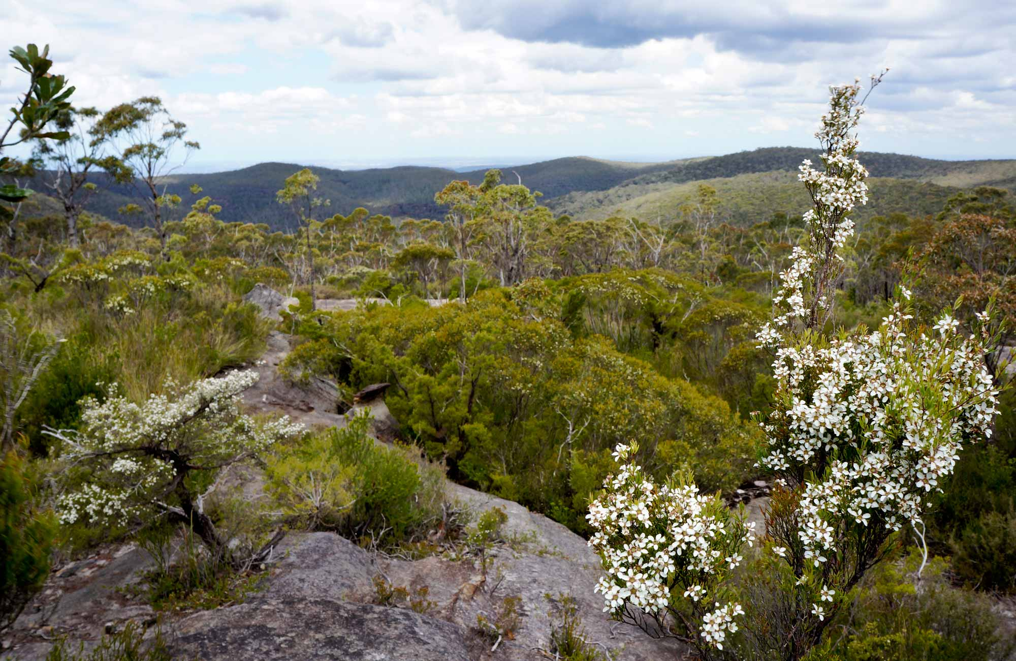 Heathland near Murphys Glen campground, Blue Mountains National Park. Photo: Steve Alton