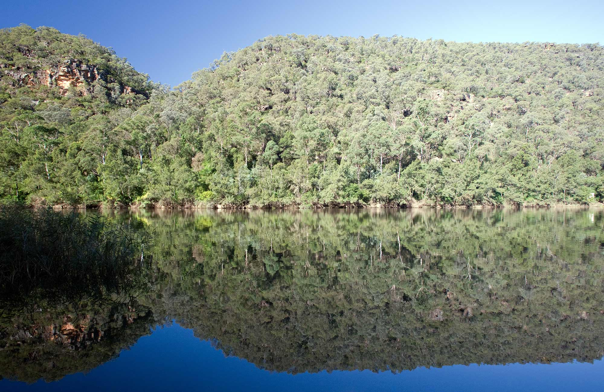 Nepean river reflection, Blue Mountains National Park. Photo: Nick Cubbin/OEH