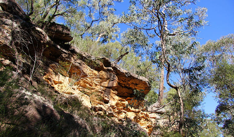 Reach Blue Pool by walking the track along the base of the sandstone cliff. Photo: OEH/Natasha Webb