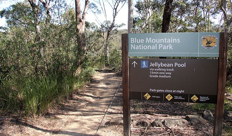 Start of Jellybean Pool track, Blue Mountains National Park. Photo: Natasha Webb/OEH