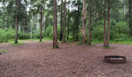 Murphys Glen campground, Blue Mountains National Park. Photo: Arthur Henry