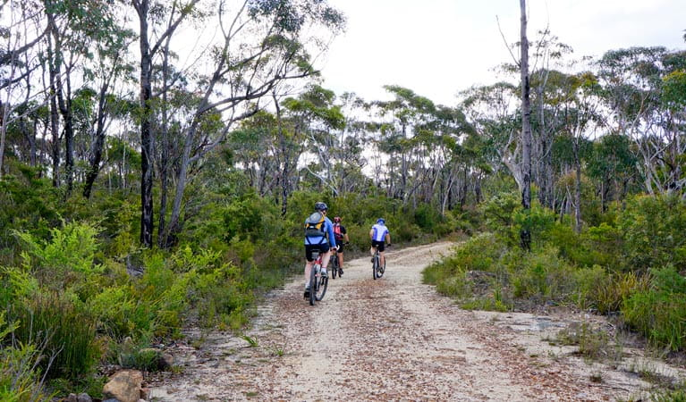 Woodford - Oaks trail, Blue Mountains National Park. Photo: Steve Alton/NSW Government