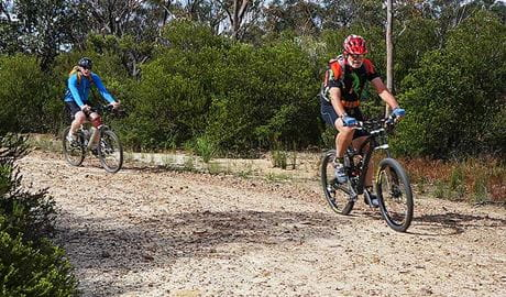 Two mountain bike riders on Murphys Road 4WD and cycle trail, near Woodford, Blue Mountains National Park. Photo: Stephen Alton/OEH