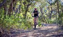 A mountain bike rider on Andersons trail in Blue Mountains National Park. Photos: Nick Cubbin/OEH