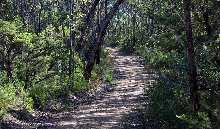Unsealed Andersons trail winds through eucalypt forest in Blue Mountains National Park. Photo: Nick Cubbin/OEH