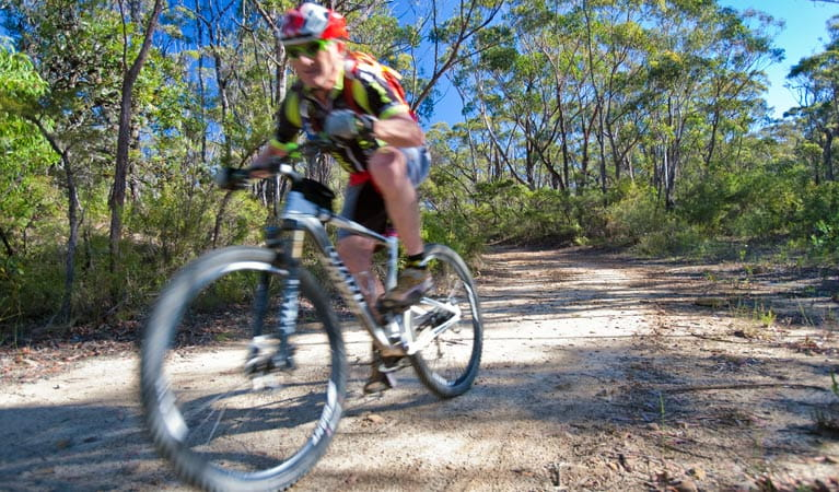 A bike rider zooms along the unsealed Andersons trail in Blue Mountains National Park. Photo: Nick Cubbin/OEH