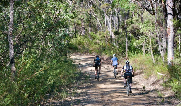 Rear view of 3 mountain bike riders cycling on Andersons trail in Blue Mountains National Park. Photo: Nick Cubbin/OEH