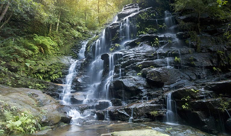Valley of the Waterfalls, Blue Mountains National Park. Photo: David Finnegan/OEH
