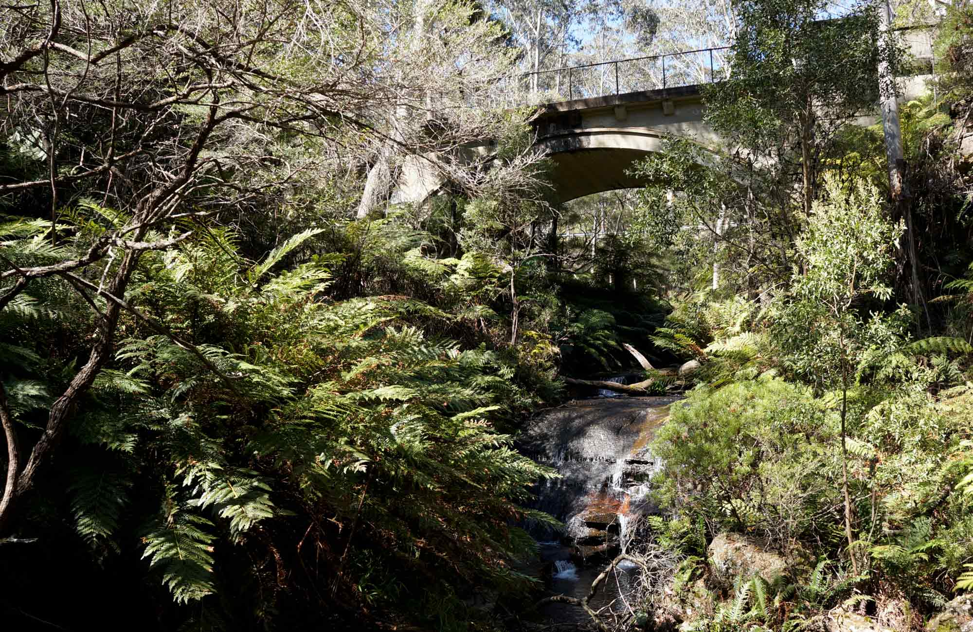 Leura Cascades Picnic Area, Blue Mountains National Park. Photo: Steve Alton
