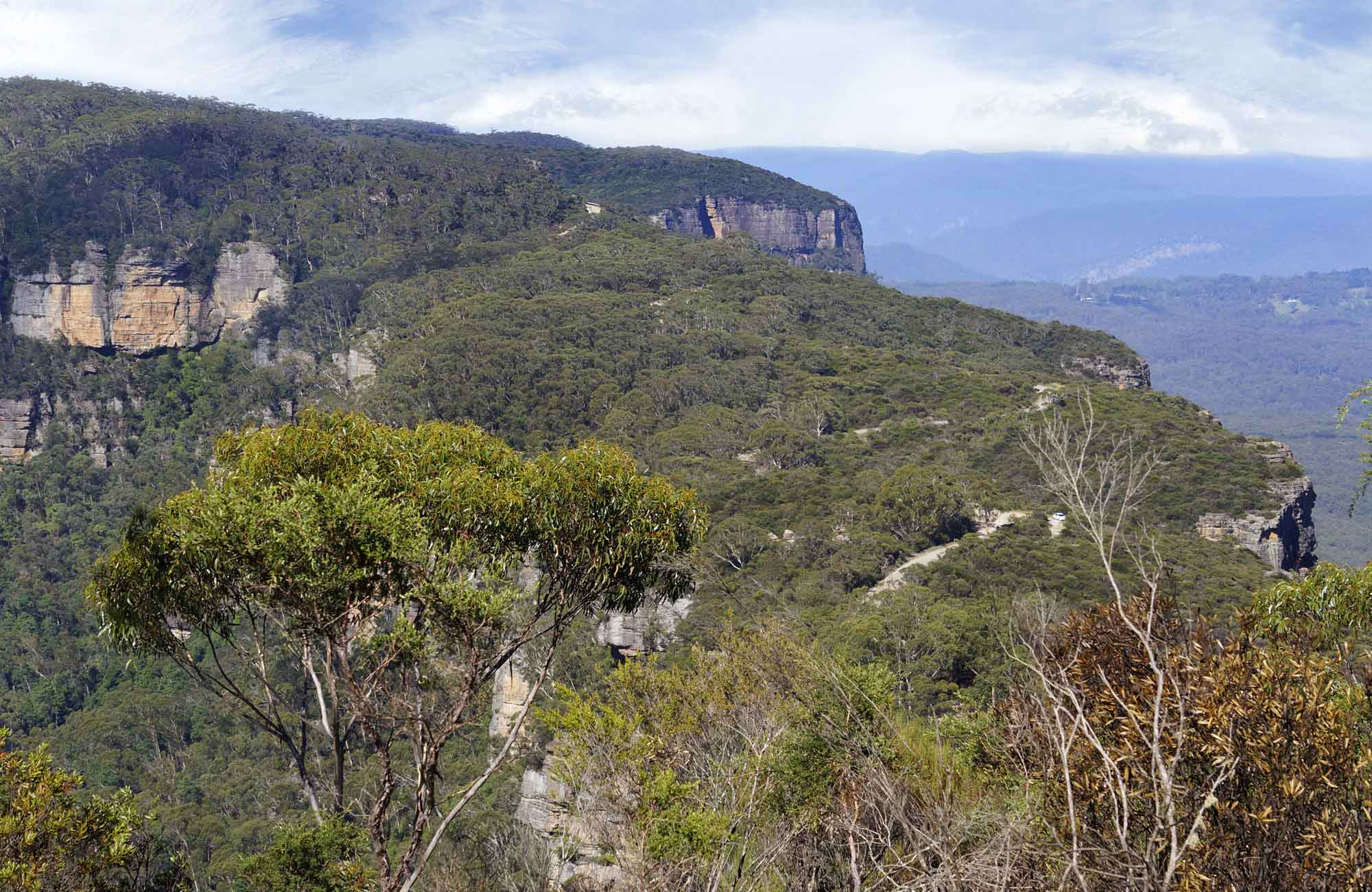 Narrow Neck Fire Trail, Blue Mountains National Park. Photo: Steve Alton/NSW Government
