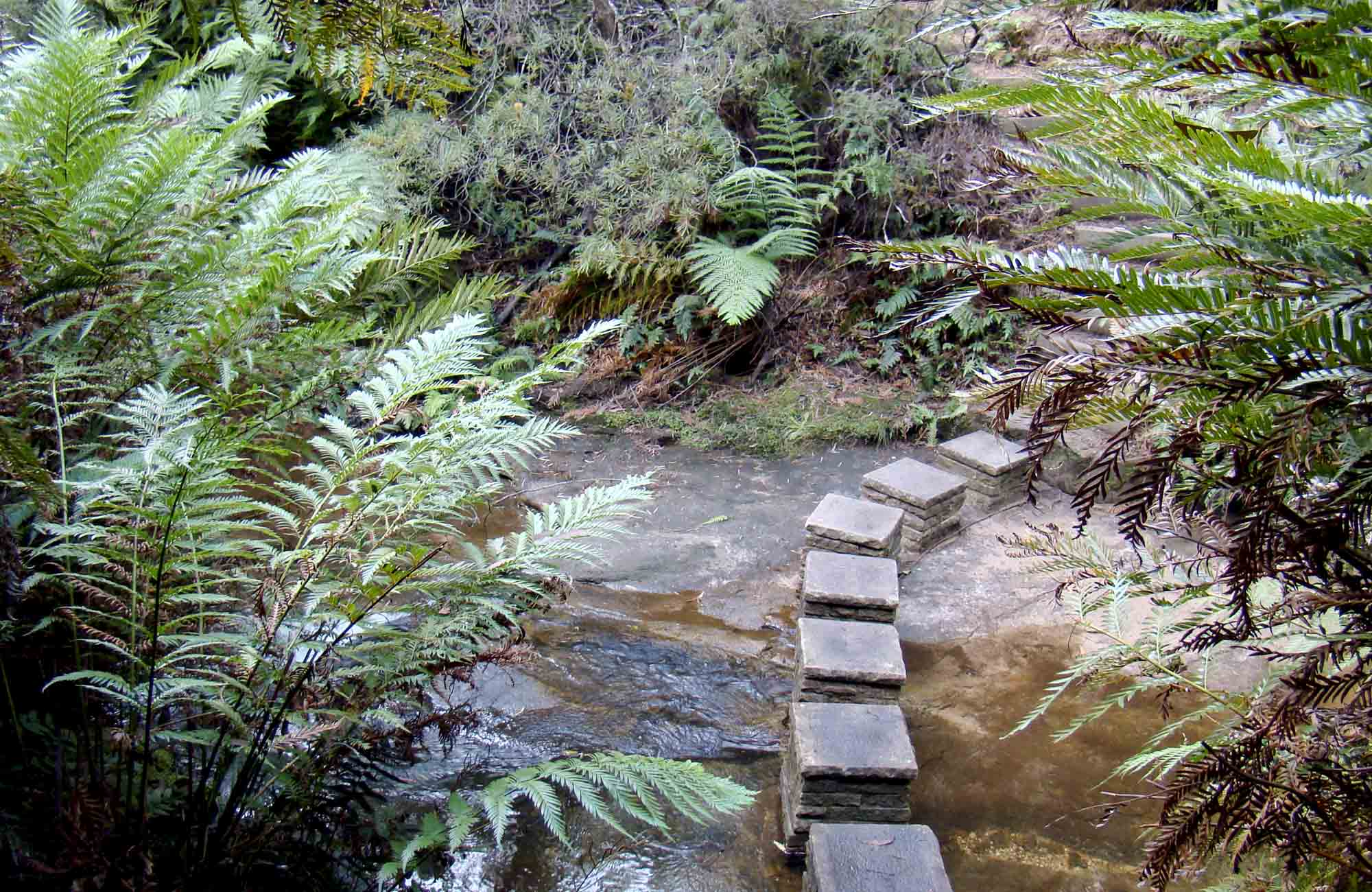 Nature track, Blue Mountains National Park. Photo: Steve Alton/OEH