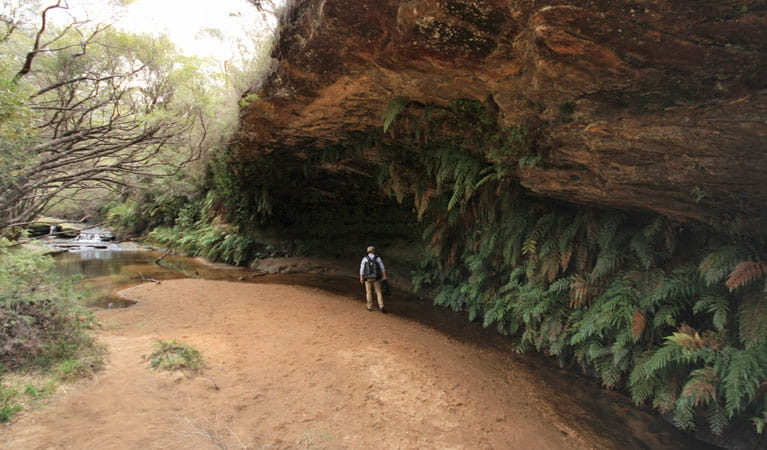 Charles Darwin walk, near Wentworth Falls, Blue Mountains. Photo: Elinor Sheargold/OEH.