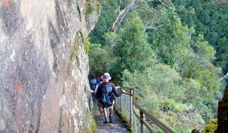Progressive Near Me >> Furber Steps-Scenic Railway walking track | NSW National Parks