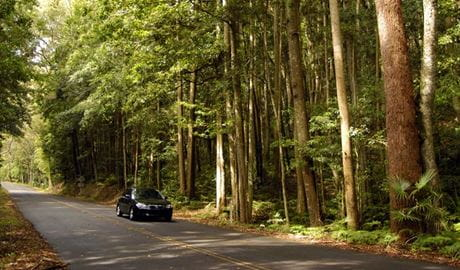 Greater Blue Mountains drive, Blue Mountains National Park. Photo: Hamilton Lund/Destination NSW