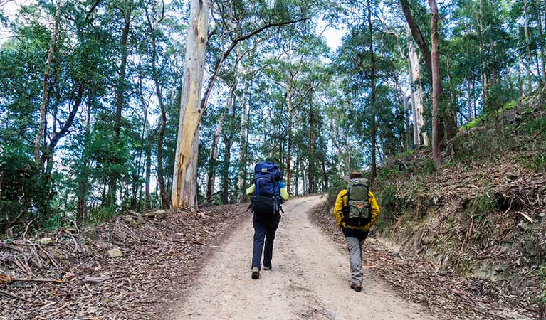 A couple with backpacks walk a fire trail to Kedumba River Crossing campground, Blue Mountains National Park. Photo: Simone Cottrell/OEH