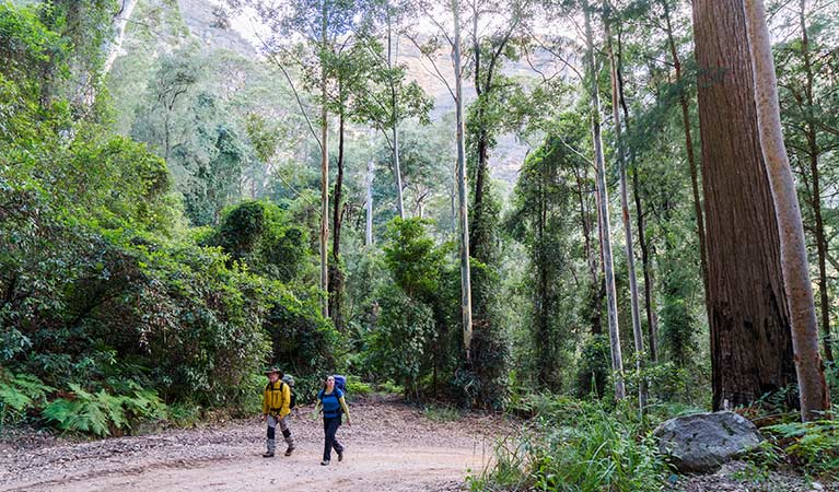 A couple walk through forest to walk-in Kedumba River Crossing campground, Blue Mountains National Park. Photo: Simone Cottrell/OEH