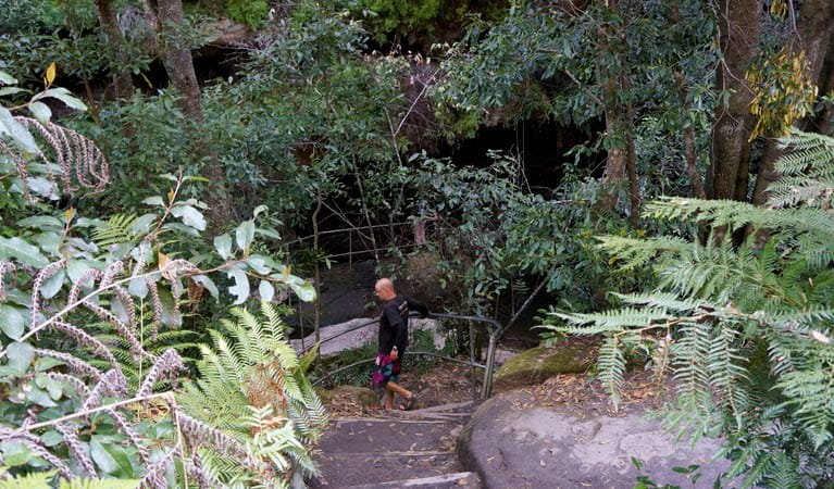 A walker on Leura Cascades Fern Bower circuit, Blue Mountains National Park. Photo: Steve Alton/OEH
