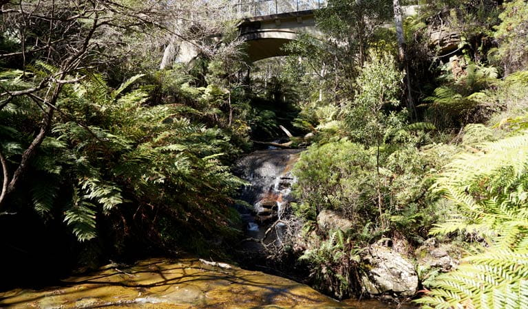 Leura Cascades picnic area in the Blue Mountains. Photo: Steve Alton