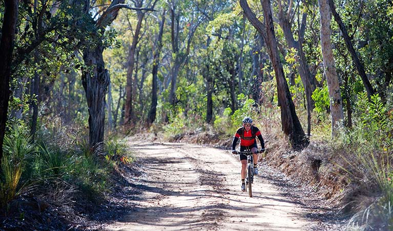 A man cycles along a dirt road on the Wentworth Falls to McMahons Point trail in Blue Mountains National Park. Photo: Nick Cubbin/OEH