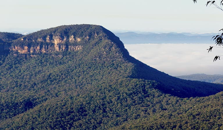 Korowal Knife Edge on Mount Solitary, Blue Mountains National Park. Photo: Steve Alton/OEH.