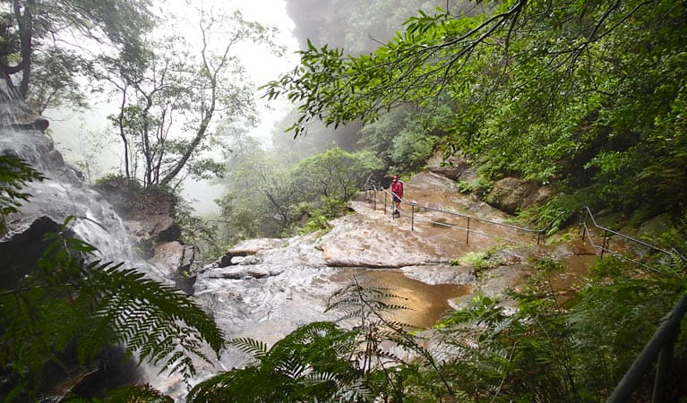 National Pass, Blue Mountains National Park. Photo: Aine Gliddon Copyright: NSW Government