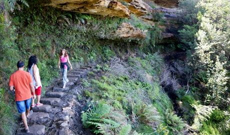 Undercliff-Overcliff circuit, Blue Mountains National Park. Photo: Steve Alton