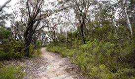 Six Foot Track, Blue Mountains National Park. Photo: Steve Alton/NSW Government