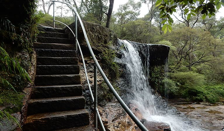 Stone-carved steps climb next to Weeping Rock waterfall, near Wentworth Falls, in Blue Mountains National Park. Photo: Arthur Henry/OEH