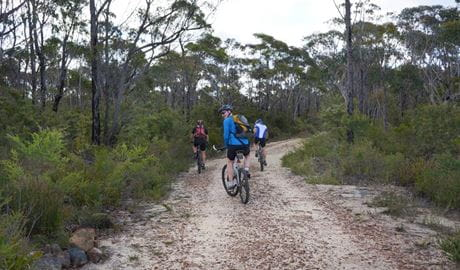 Three cyclists ride the trail from Wentworth Falls to Woodford, Blue Mountains National Park. Photo: Stephen Alton/OEH