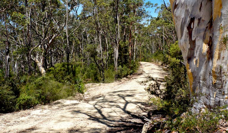 Unsealed Ingar Road and Bedford Creek trail, Blue Mountains National Park. Photo: Stephen Alton/OEH